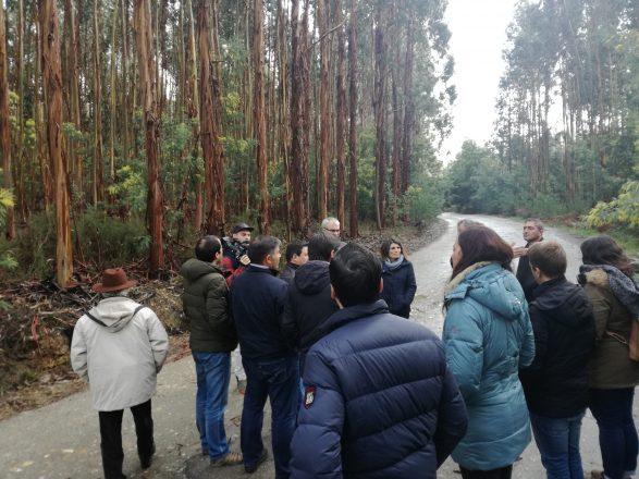 certificacao florestal