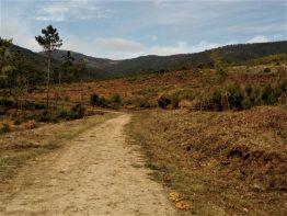 Trabalho da Brigada de Sapadores Florestais da CIMAT